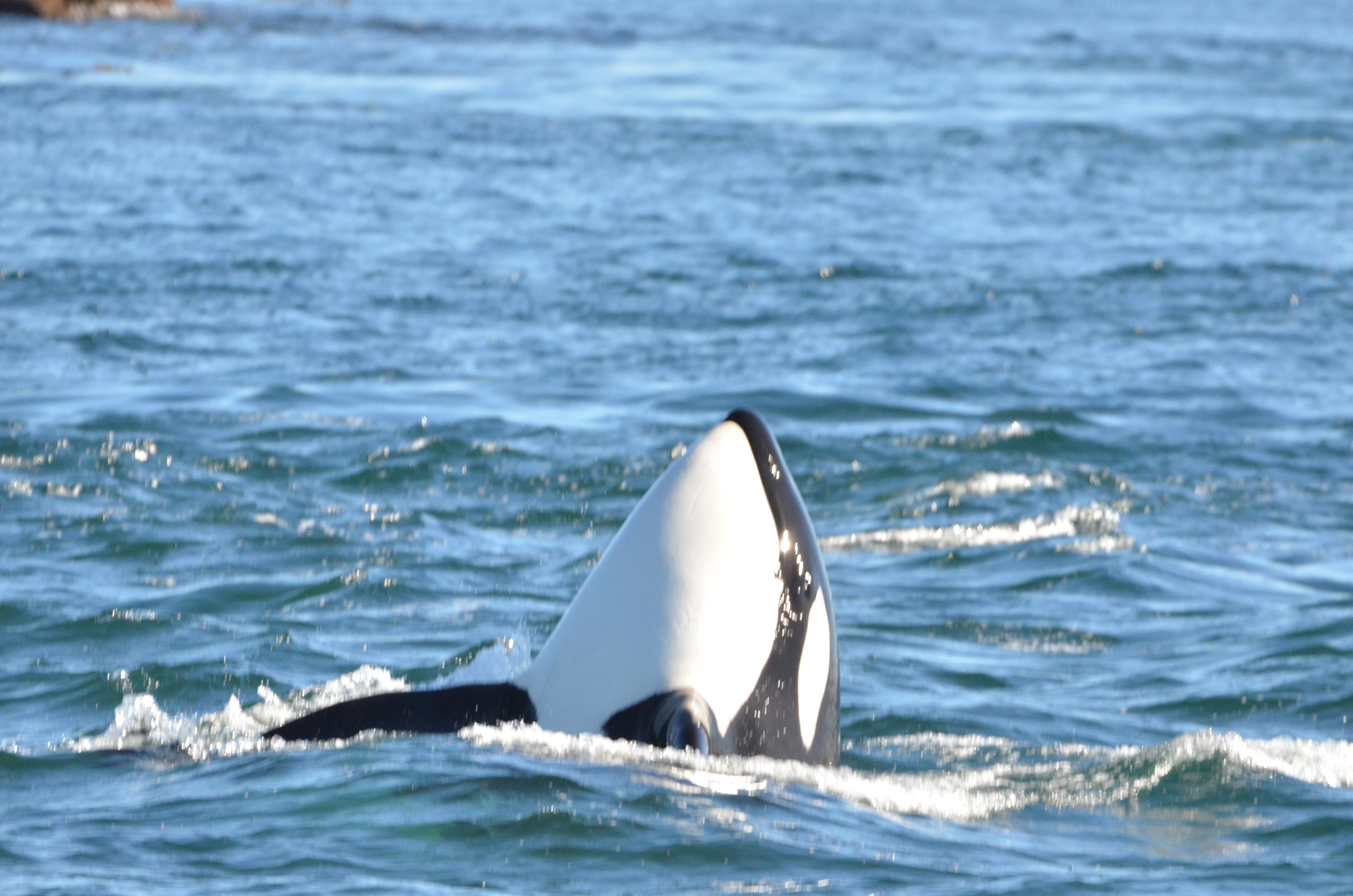 _Whale_031