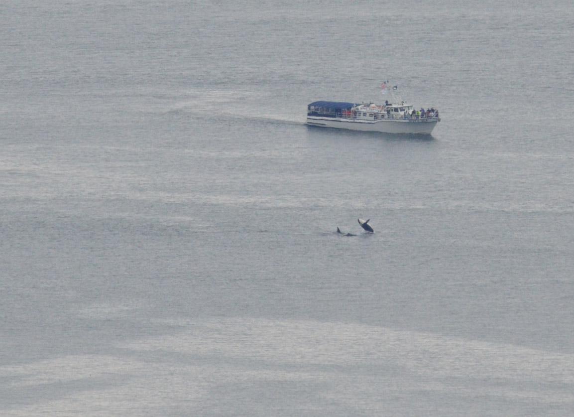 Orcas 041