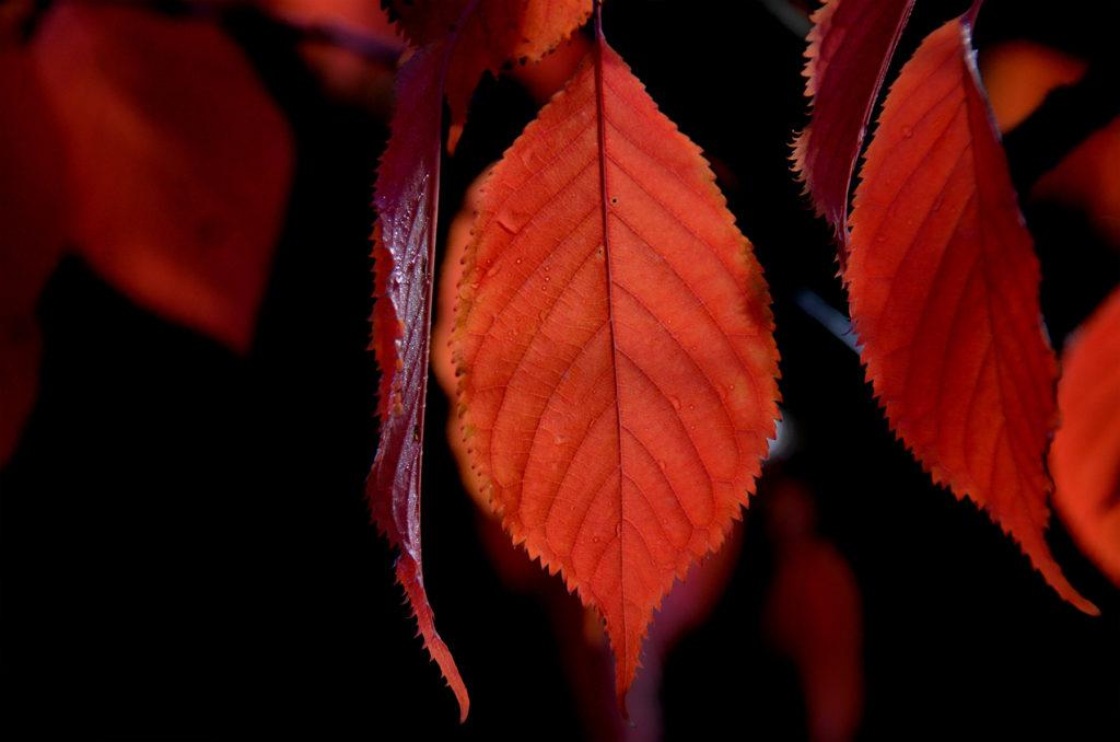 100916_autumn_111