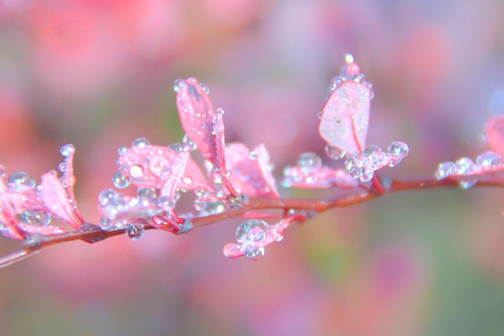 100916_autumn_147